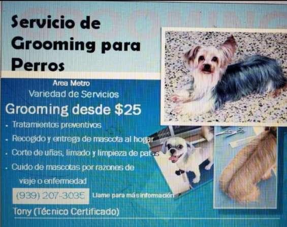 Servicio de grooming para perros